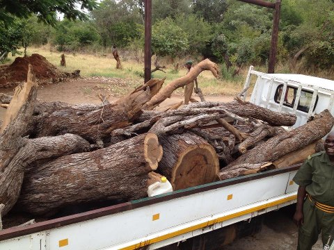 Wood poachers caught in national park
